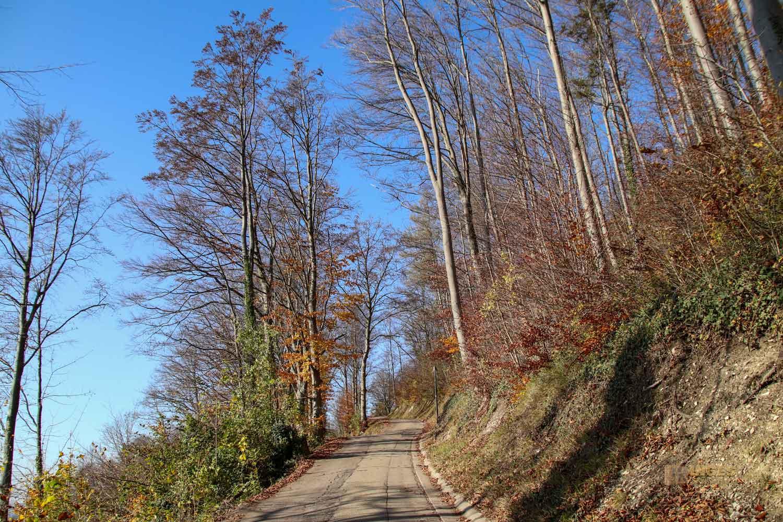 Weg zur Burgruine Hohenrechberg 0046