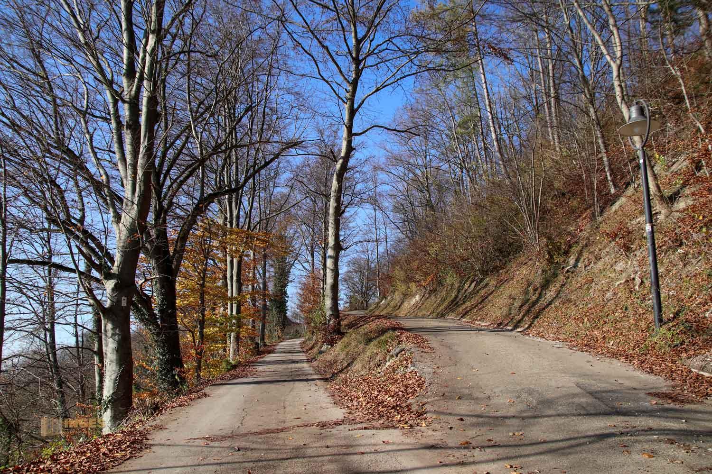 Weg zur Burgruine Hohenrechberg 0053