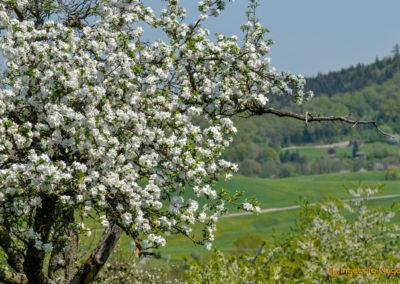 Waldstetten Ostalbkreis