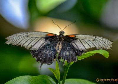 Schmetterlingshaus Insel Mainau