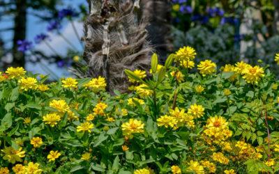 Insel Mainau – Blumen satt