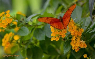 Insel Mainau – Schmetterlingshaus