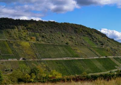 Weinberge in Briedel