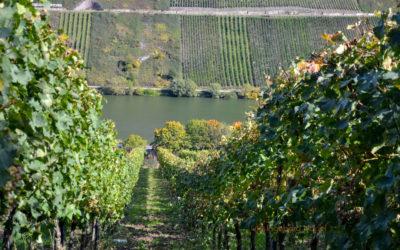 Weinbau an der Mosel