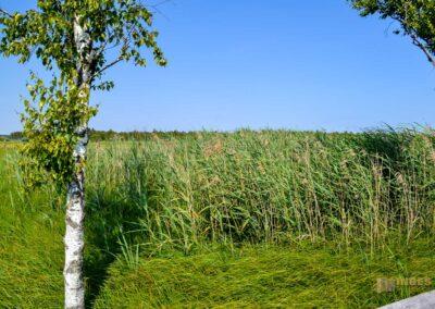 Federsee bei Bad Buchau