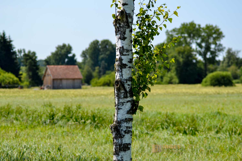 Natur am Federsee bei Bad Buchau