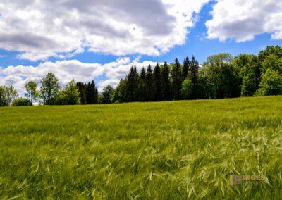 Weg zum Franz-Keller Haus Kaltes Feld bei Schwäbisch Gmünd
