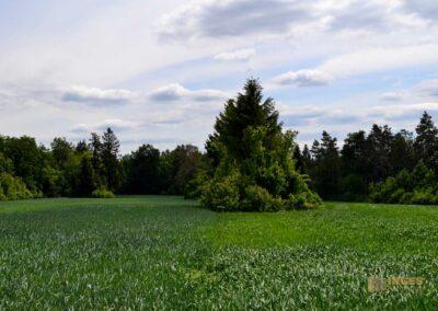 Kaltes Feld bei Schwäbisch Gmünd