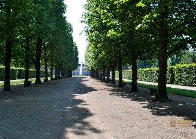 Baumallee zu Schloss Pillnitz