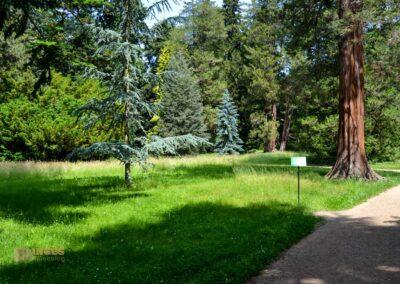 Koniferenhain Park Pillnitz