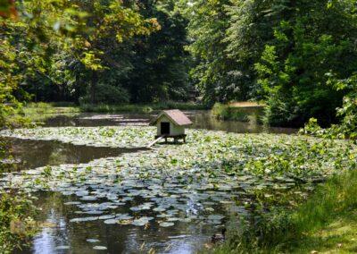 Englischer Garten Park Pillnitz
