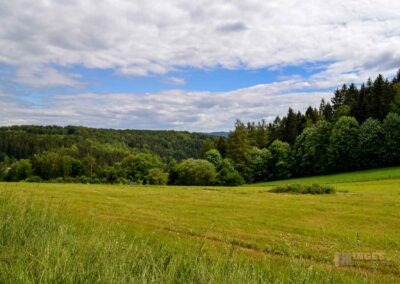 Natur auf dem Weg zur Talsperre Saidenbach