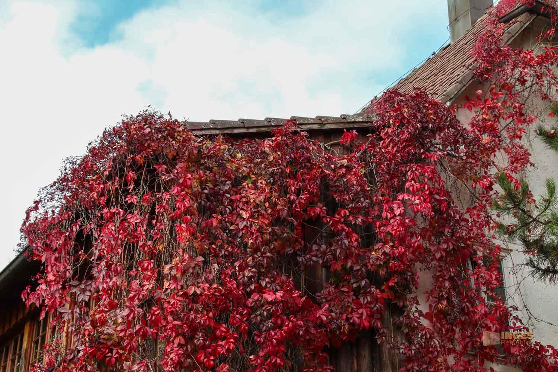 Im Kloster Adelberg