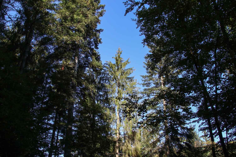 Im Wald am Herrenbachstausee